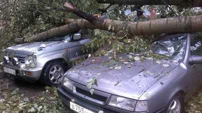 В Брянске ураган повалил более полусотни деревьев