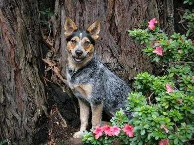 Заблудившегося в лесу брянского пенсионера спасла его собака