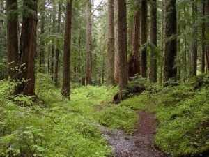 Брянские спасатели  ищут женщину, заблудившуюся в сельцовских лесах