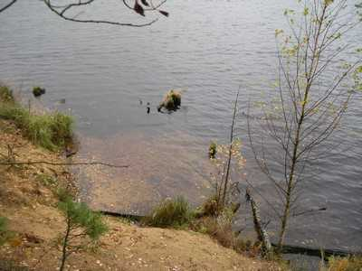 Брянский водитель утонул ночью с автомобилем