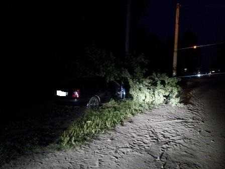Брянский водитель, врезавшийся в дерево на Литейной,  умер в больнице