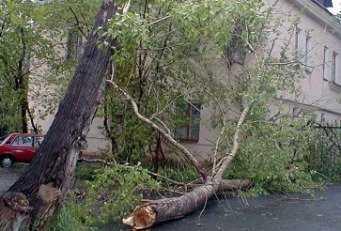 В Москве  упавшее дерево убило жительницу Брянска