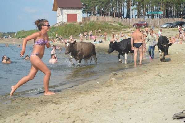 Брянский Орлик: «Телки, солнце, пляж – все как во Флориде»