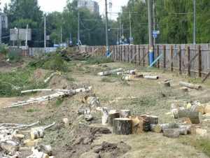 Главный благоустроитель Брянска уволен из-за  вырубки деревьев на Крахмалёва