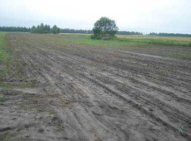 На Брянщине объявлен чрезвычайный режим из-за гибели сельхозкультур