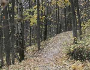 В Брянске обсудят инвентаризацию лесов