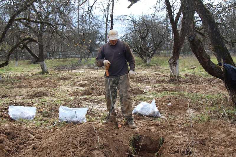 В Локте выкопали останки более трехсот фашистов