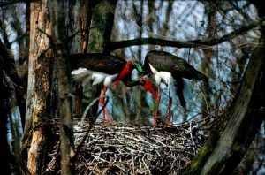 В брянском заповеднике ожидают прилёта зимующих птиц