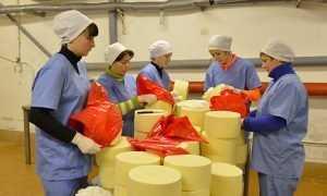 Брянских переработчиков «обеспечат молоком» по щучьему велению