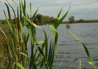 Жителям Погарского района суд проторил путь к отобранным водоемам
