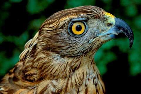 В брянском заповеднике насчитали почти 40 тысяч птиц