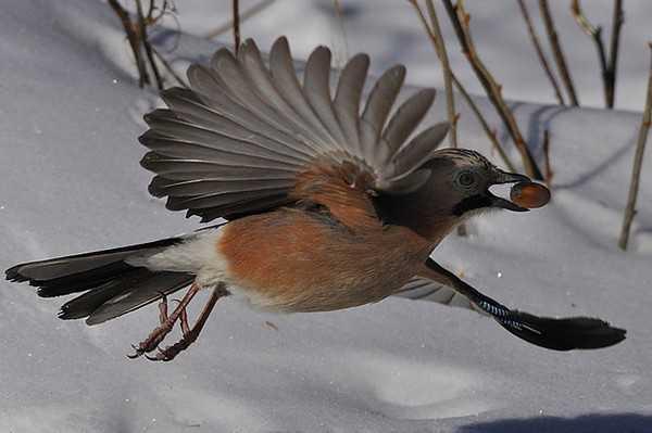 В заповеднике «Брянский лес» началась акция «Покормите птиц»