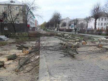 В Клинцах разбушевались беспощадные  «дровосеки»