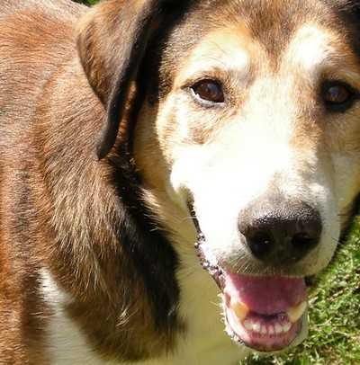 В Красной горе водителя мопеда искусали собаки