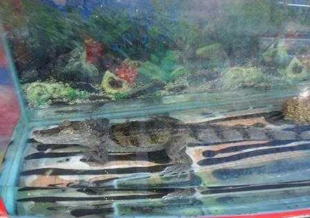 Смрад клинцовского зоомагазина, где погибли животные, вызвал скандал