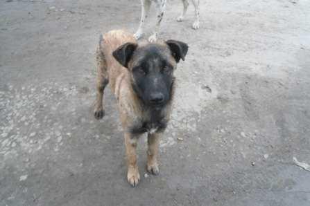 Директора брянского асфальтового завода попросили не убивать собак