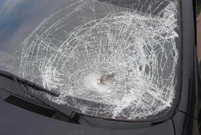 Под Брянском «Лада Калина» врезалась в грузовик – погибла девушка