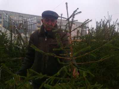 В Брянской области елки и сосны взяты под усиленную охрану