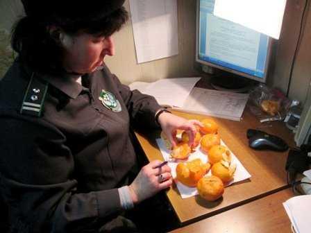Новогодние мандарины, проверенные в Брянске, оказались зараженными