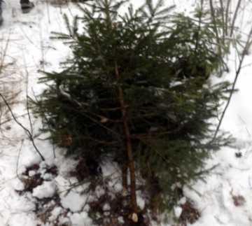В брянских лесах поймали троих нелегальных дровосеков