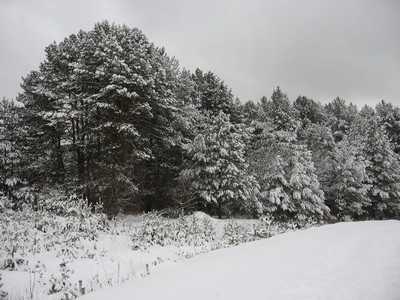 20-градусный мороз предрекают синоптики в Брянской области 27 января