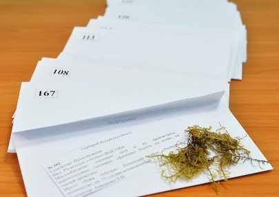 Брянскому заповеднику подарили коллекцию мохообразных