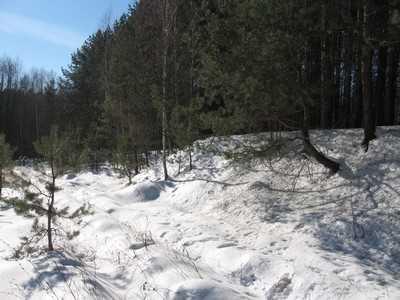 Под брянской деревней заблудилась и замерзла полуслепая девушка