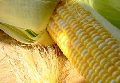 На Брянщину не пустили  более семи тонн американских семян