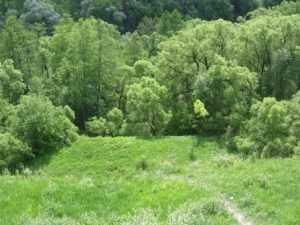 Молодая, да ранняя гвардия решит судьбу брянских лесов