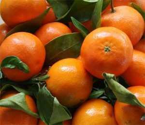 Из Брянска в Турцию вернули 19 тонн мандаринов