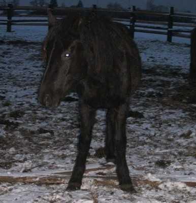 В год Лошади брянских лошадей решили съесть
