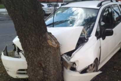 На трассе под Брянском водителя «Тойоты» убило дерево