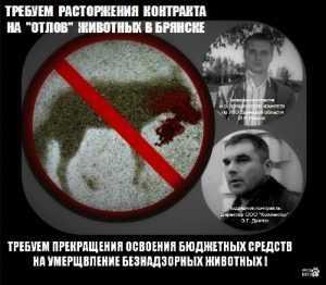 Брянская прокуратура занялась отловщиками бродячих собак