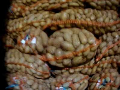В Брянскую область не пустили подозрительный картофель