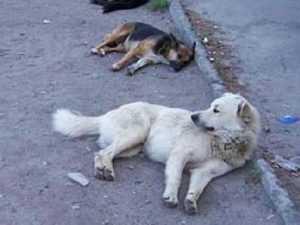 Договор брянской власти с истребителями бродячих собак признан незаконным