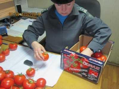 Из Брянской области в Турцию вернули опасные помидоры