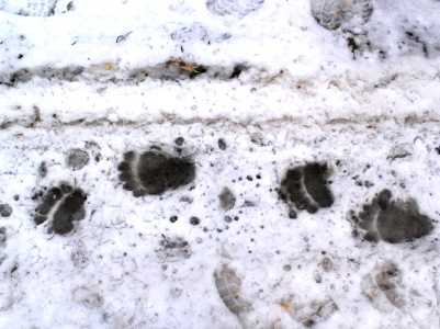 В брянском заповеднике проснулись медведи
