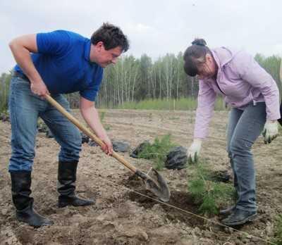 В брянских лесах высадят 10 миллионов сосен, елей и дубов