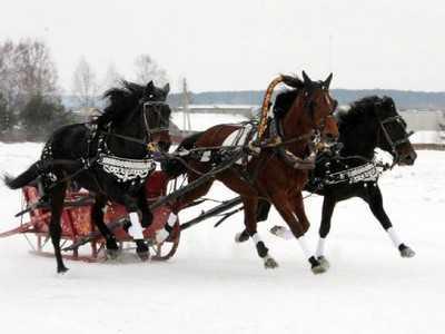 Локотская тройка победила в Вологде