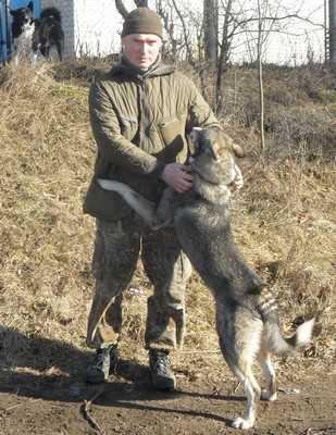 В Клинцах провели смотр четвероногих охотников