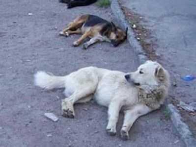 Бездомных животных в Брянске убивали смертельными препаратами