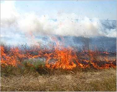 Суземские лесники и пожарные спасли  Украину от  огня