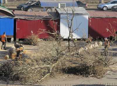 Брянские застройщики забыли посадить 1500 деревьев