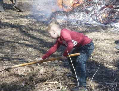 Брянские добровольцы очистили 300-летний ясень от мусора