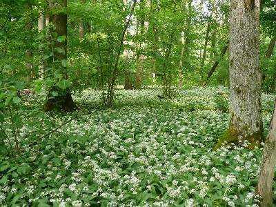 В брянском заповеднике зацвели редкие растения