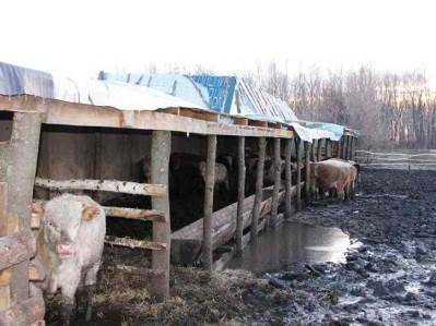 Суд наказал брянского фермера, прятавшегося от ветеринарной проверки