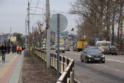 Деревья на Объездной улице Брянска спилят и посадят новые