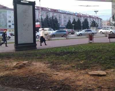 В Брянске на площади Партизан спилили деревья