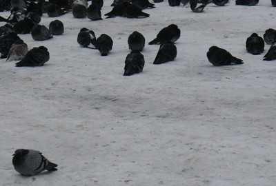 В Брянскую область к концу недели вернутся заморозки