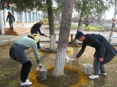 Брянцев пригласили на «Зеленую весну»